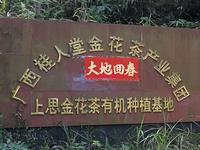上思金花茶有机种植基地