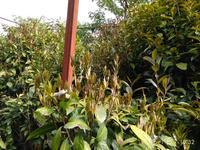 桂人堂种植基地