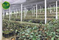 桂人堂有机种植基地
